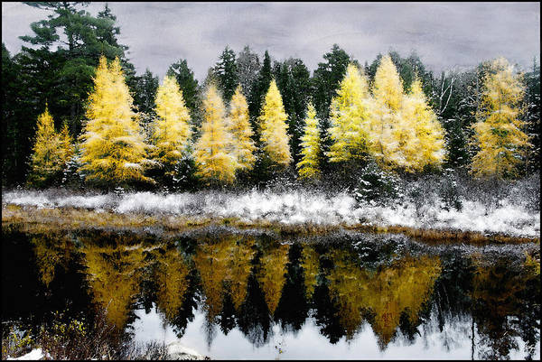 Tamarack Under A Painted Sky Art Print