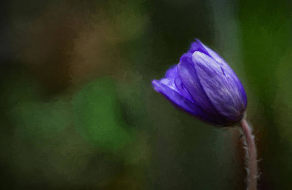 Photograph - First Spring Flower by Mary Jo Allen