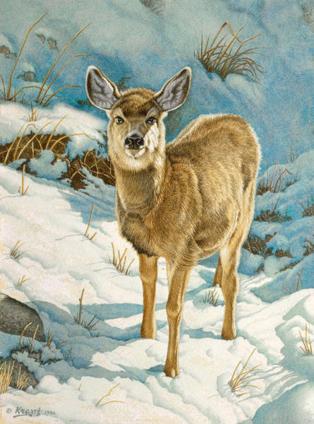 Fawn Painting - First Winter  - Fawn by Paul Krapf