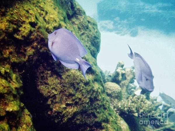 Photograph - Fish And Coral by D Hackett