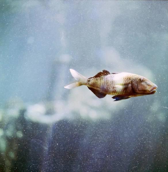 Sea Life Photograph - Fish At Sea Life Park by Horst P. Horst