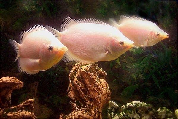 Brian Wilson Wall Art - Photograph - Fish by Brian Wilson