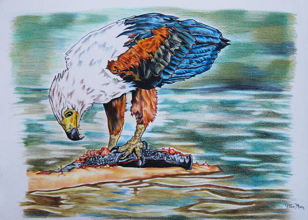 Carnivorous Drawing - Fish Eagle by Hiten Mistry