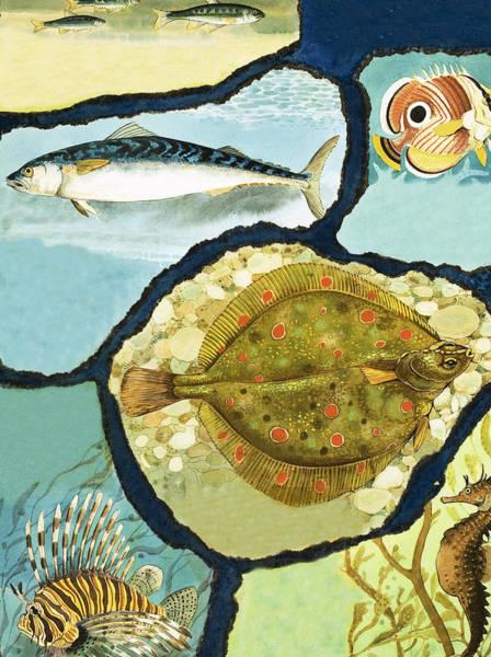Light Blue Drawing - Fish by English School