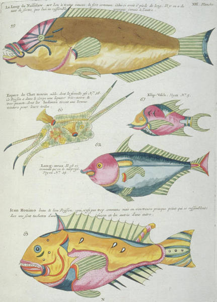 Natural History Photograph - Fish Illustrations by Natural History Museum, London/science Photo Library