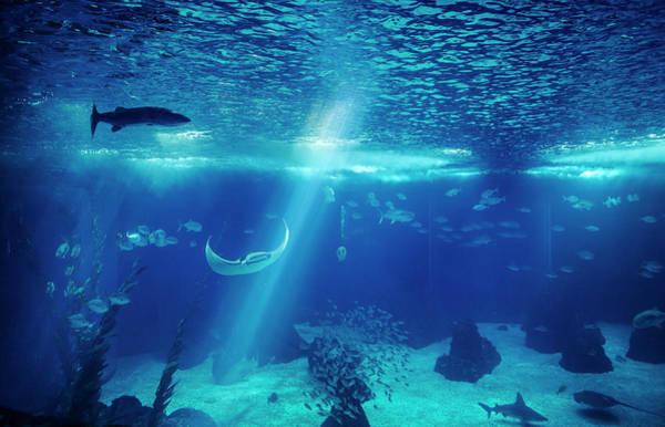 Fish Photograph - Fish In A Big Blue Aquarium by Piola666