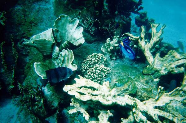 Photograph - Fish In The Coral by D Hackett