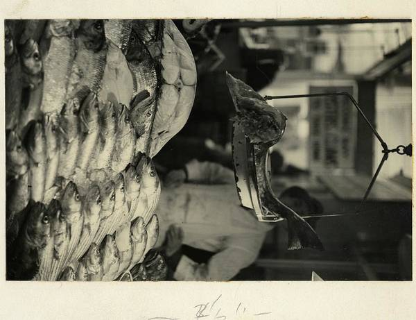 Urban Scene Photograph - Fish In The Washington Market by Remie Lohse