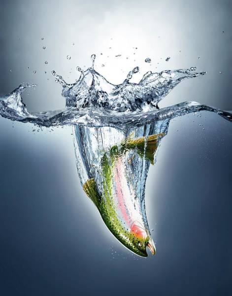 Wall Art - Photograph - Fish Landing In Water by Leonello Calvetti/science Photo Library