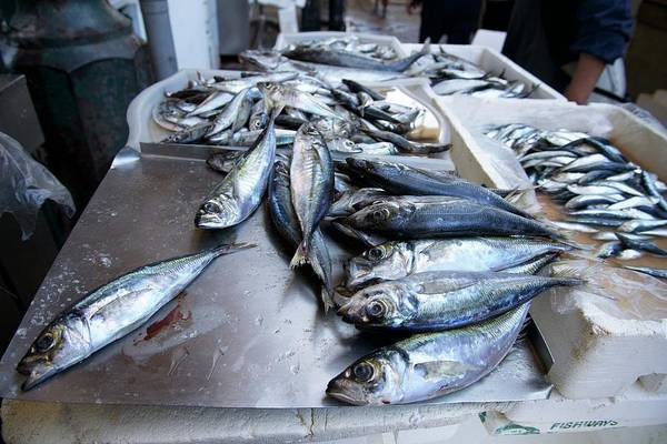 Omega Photograph - Fish Market In Porto by Sinclair Stammers