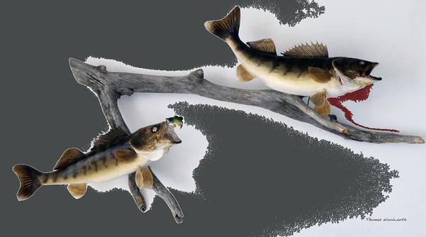 Wall Art - Photograph - Fish Mount Set 06 B by Thomas Woolworth