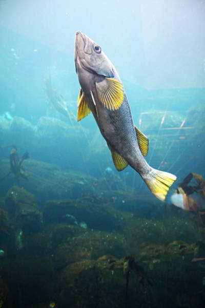 Photograph - Fish by Pat Moore