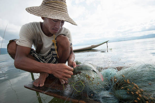 Fish Trap Photograph - Fisherman, Inle Lake, Shan State by Cultura Rm Exclusive/yellowdog