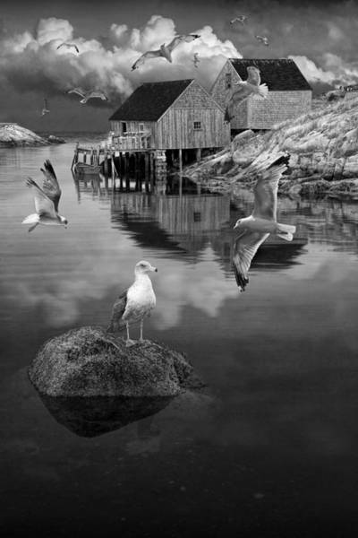 Photograph - Fisherman's Wharf With Flying Gulls In Peggy's Cove by Randall Nyhof