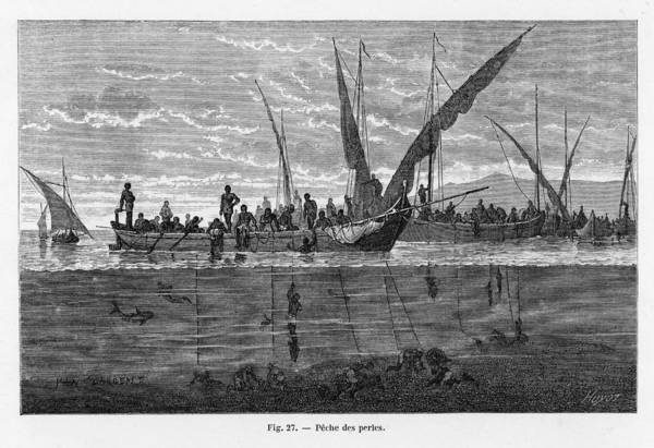 Persian Gulf Drawing - Fishing For Pearls In The  Persian Gulf by Mary Evans Picture Library