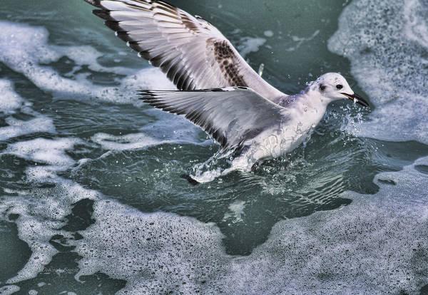 Photograph - Fishing In The Foam by Deborah Benoit