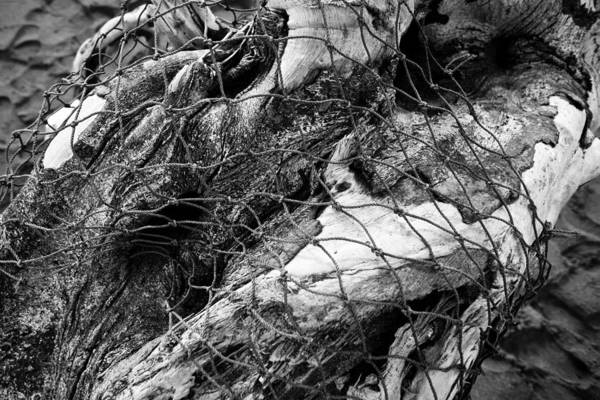 Photograph - Fishing Net On Driftwood by John Magyar Photography