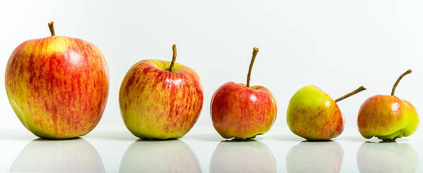 Photograph - Five Apples by Gary Gillette