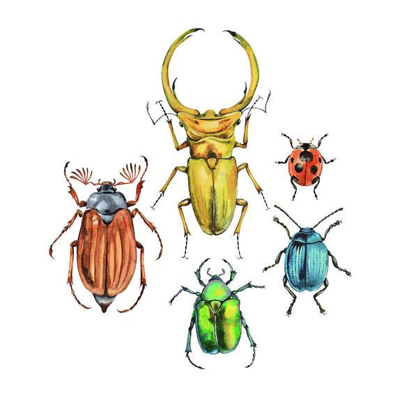 Digital Art - Five Colorful Watercolor Beetles by Anastasiakutic