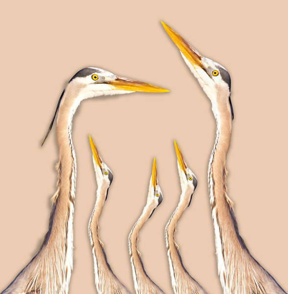 Wall Art - Photograph - Five Herons by Betsy Knapp