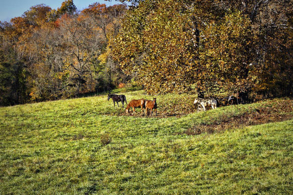 Photograph - Five Horses by Cricket Hackmann