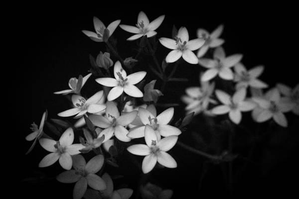 Photograph - Five Petals by Edgar Laureano