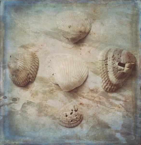 Wall Art - Photograph - Five Seashells  by Toni Hopper