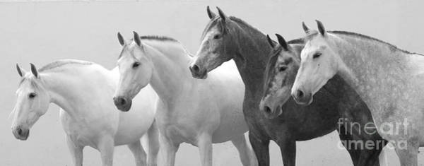 Wall Art - Photograph - Five Spanish Mares by Carol Walker