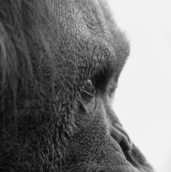 Photograph - Fixation by Jeremiah John McBride