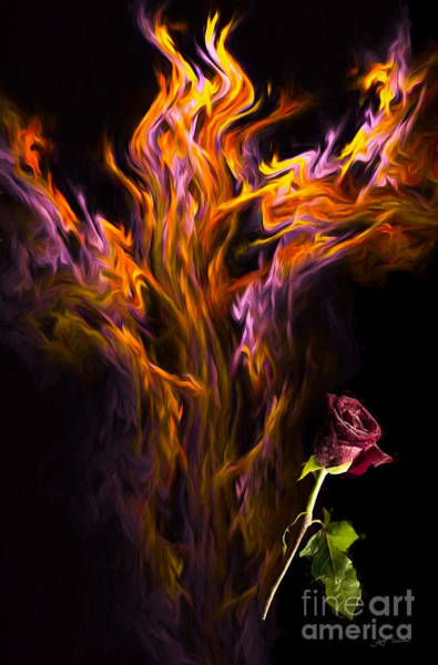 Wall Art - Photograph - Flame Of Passion And A Beautiful Red Rose by Heinz G Mielke