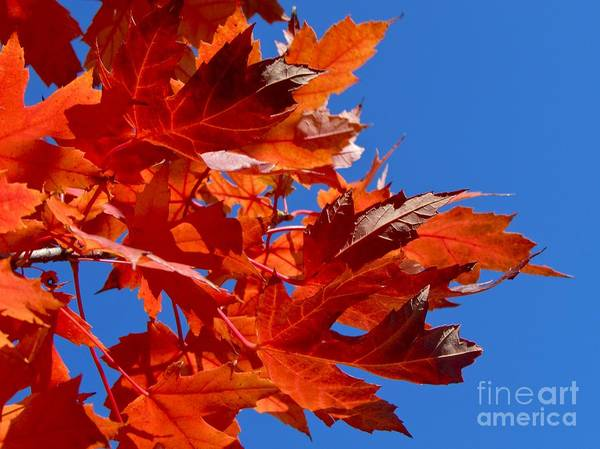 Photograph - Flame On by Pamela Clements