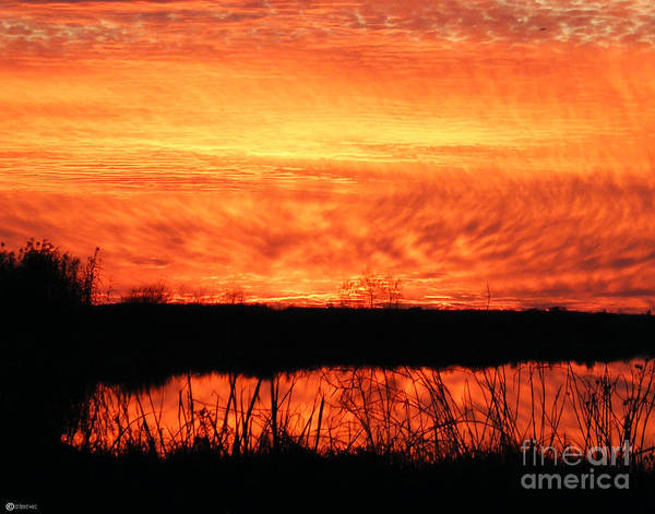 Photograph - Flamed Sunset by Lizi Beard-Ward