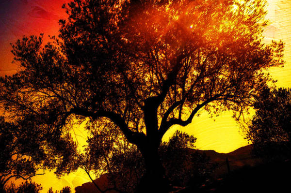 Passionate Photograph - Flaming Tree by Jenny Rainbow