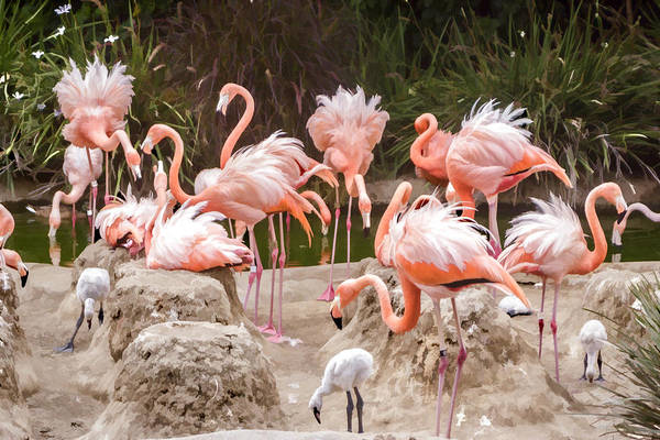 Digital Art - Flamingo Colony by Photographic Art by Russel Ray Photos