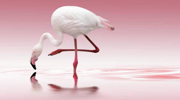 Wall Art - Photograph - Flamingo by Doris Reindl