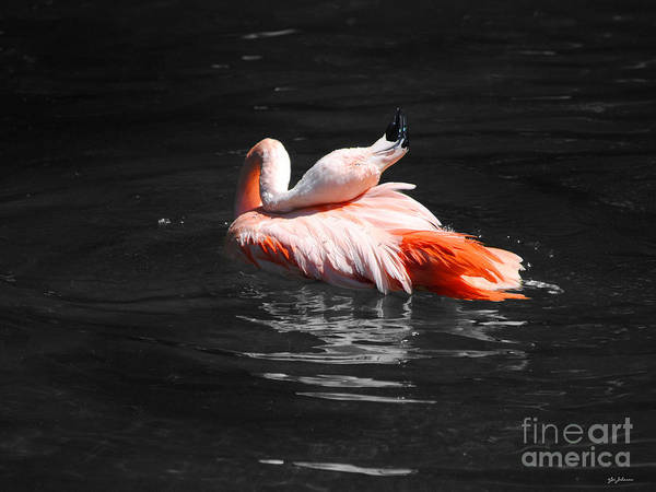 Photograph - Flamingo by Jai Johnson