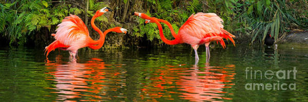 Photograph - Flamingo Panorama by Les Palenik