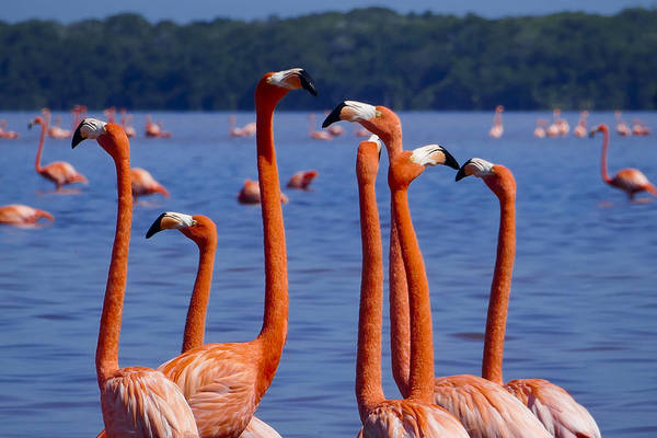 Photograph - Flamingos 1 by Skip Hunt