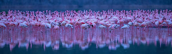 Crowds Wall Art - Photograph - Flamingos by David Hua