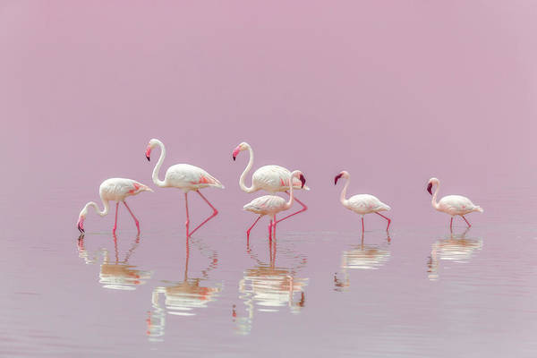 Wall Art - Photograph - Flamingos by Eiji Itoyama