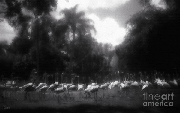 Photograph - Flamingos In Black And White by Jeff Breiman