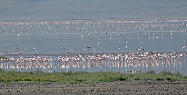 Photograph - Flamingos On Lake Magadi by Tony Murtagh