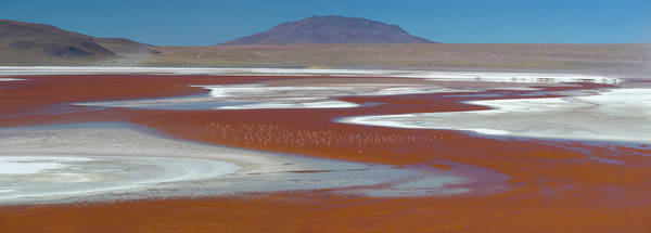 Laguna Mountains Photograph - Flamingos On The Red Waters Of Laguna by Panoramic Images