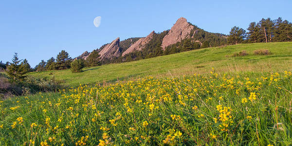 Photograph - Flatiron Flowers by Aaron Spong