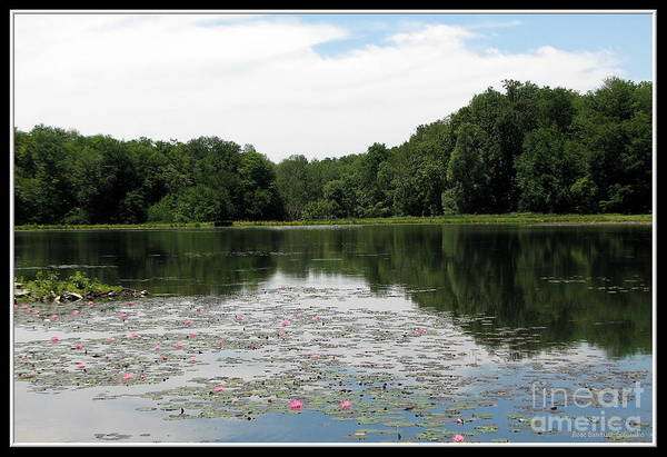 Photograph - Flattail Lake At Reinstein Woods by Rose Santuci-Sofranko
