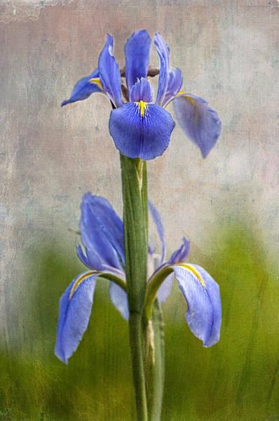 Fleur De Lis Photograph - Fleur De Lis by Bonnie Barry