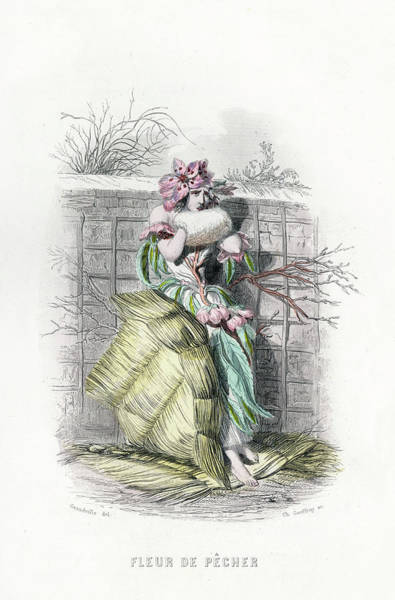Wall Art - Drawing - Fleur De Pecher Peach Blossom by Mary Evans Picture Library