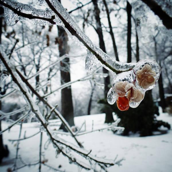 Photograph - Fleur D'hiver by Natasha Marco