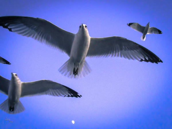 Photograph - Flew Under The Moon by Glenn Feron