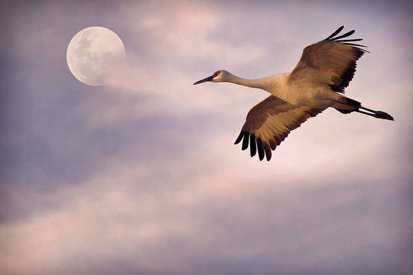 Bird In Flight Digital Art - Flight Of The Crane by Priscilla Burgers